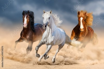 Obraz Three horse with long mane run gallop in desert