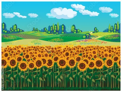 Obraz Scenic landscape with sunflowers