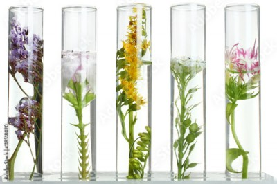 Obraz Flowers and plants in test tubes on wooden background. The concept of biological research