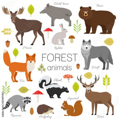Plakat Set of forest animals isolated vector. Moose, wild boar, bear, fox, rabbit, wolf skunk raccoon deer squirrel hendgehog