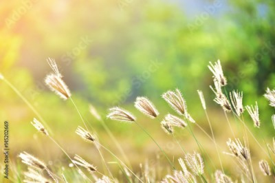 Fototapeta meadow with nature background
