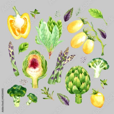 Fototapeta Isolated watercolor vegetables set with asparagus, broccoli, artichoke, spinach, tomato, pepper, basil, rosemary, thyme, dill on grey background