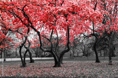 Obraz Red flower tree forest in black and white landscape