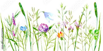 Fototapeta Floral border of a wild flowers and herbs on a white background.Buttercup, clover,bluebell,vetch,timothy grass,lobelia,spike. Watercolor hand drawn illustration.
