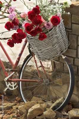 Obraz Basket of roses on a bicycle