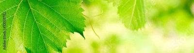 Obraz green foliage banner background with vivid colors
