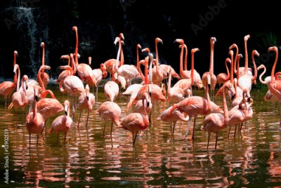 Plakat Pool of Flamingo