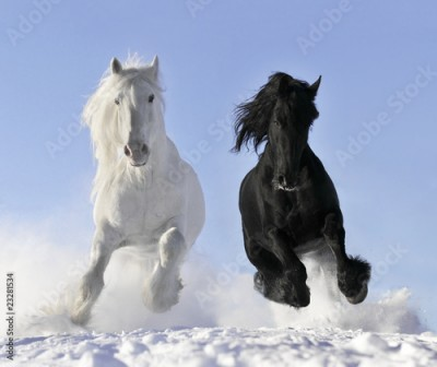 Plakat white and black horse