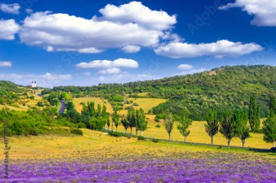 Obraz Lavender field in the summer