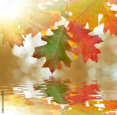 Panel Szklany Autumn oak leaves mirrored on water level