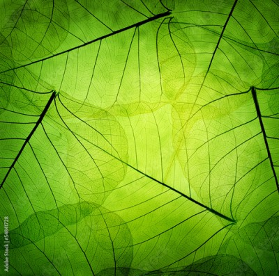 Obraz na Plexi Green leaves vintage background