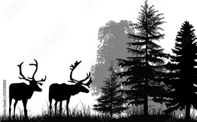 Fototapeta deer silhouettes in forest isolated on white background
