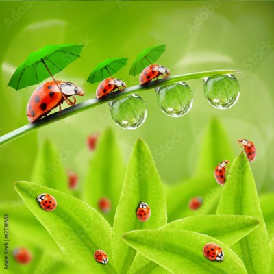 Obraz na płótnie Little ladybugs with umbrella walking on the grass.
