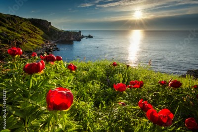 Fototapeta Sea sunrise and beautiful wild peonies on the beach