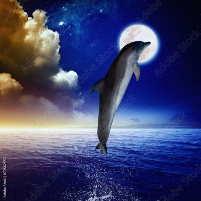 Fototapeta Dolphin and moon