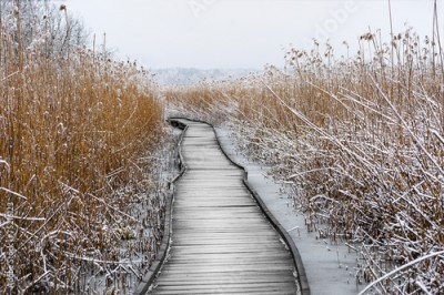 Plakat Boardwalk with frozen reeds