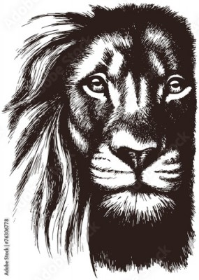 Fototapeta Lion head vector