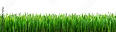 Obraz na Szkle perfect grass isolated for spring border