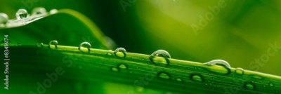 Fototapeta Water Droplets on a Leaf