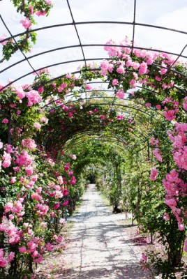 Panel Szklany romantic path into a luxuriant  rose garden
