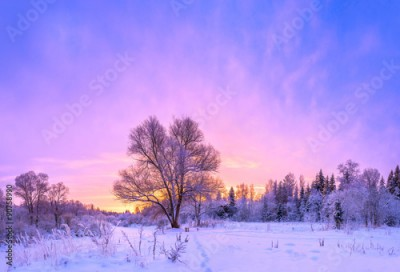 Obraz winter landscape panorama with sunset and the forest