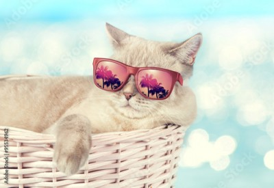 Plakat The cat in sunglasses lying in a basket on the background of the sea