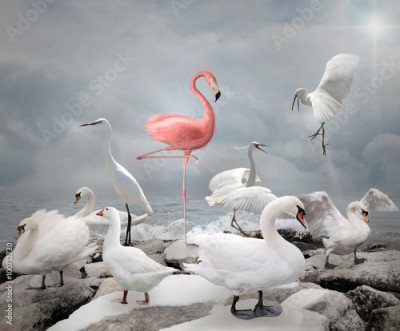 Plakat Stand out from a crowd - Flamingo and white birds