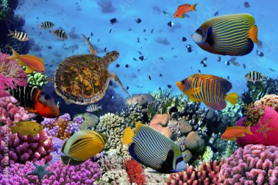 Obraz colorful coral reef with many fishes
