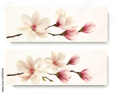 Obraz Two magnolia banners. Vector.