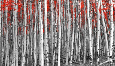 Obraz Red leaves in a black and white forest landscape