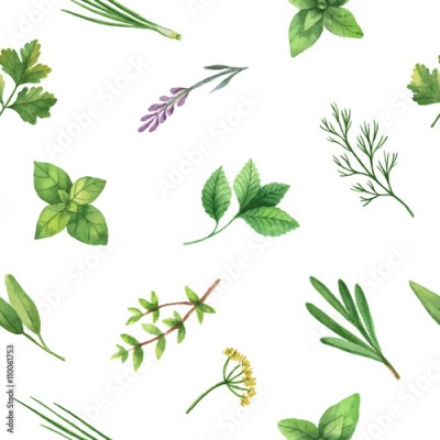 Fototapeta Watercolor vector seamless pattern hand drawn herb .