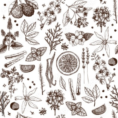 Fototapeta Vector seamless pattern with hand drawn perfumery and cosmetics ingredient sketch. Vintage background with aromatic plants for high-quality cosmetics and scented industry