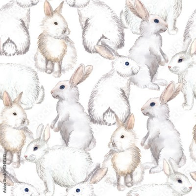 Fototapeta white rabbits background
