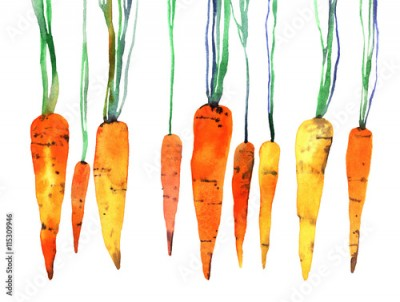 Fototapeta watercolor hand painted carrot