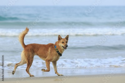 Obraz dog ,pet running at sea beach