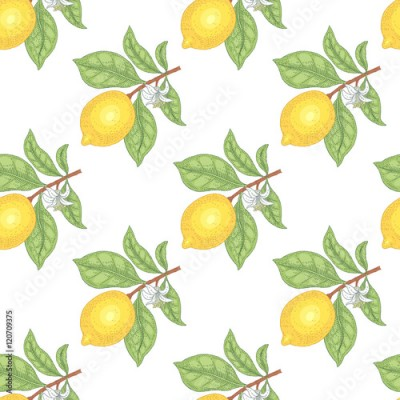 Fototapeta Illustration of lemons. Seamless vector pattern. Fruits on a white background.