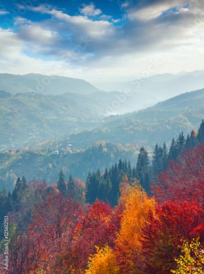 Plakat Colorful autumn morning in Carpathian mountains.