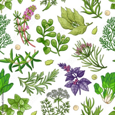 Fototapeta Vector greenery seamless pattern with spices and herbs. Decorative colorful composition on white background