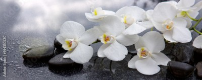 Obraz na Szkle White orchid and black stones close up.