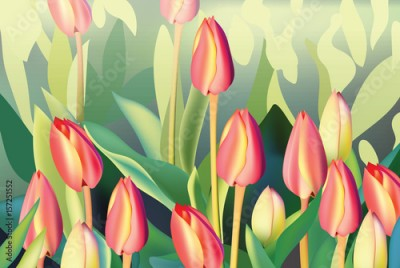 Fototapeta Red tulip flowers Spring season invitation background. Vector illustration