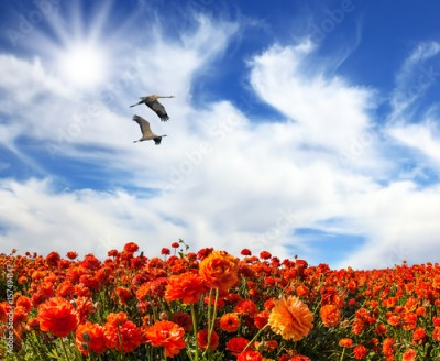Plakat Two large birds flying over flower