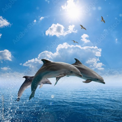 Obraz Dolphins jumping out of blue sea, seagulls fly high in blue sky