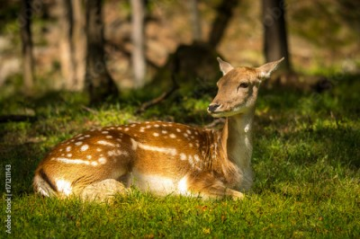 Plakat Deer enjoying a summer day