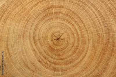 Fototapeta Close-up wood grain of tree stump